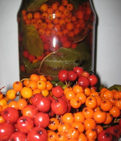 Рецепт мидии в раковинах в белом вине
